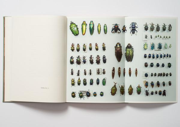 Rüsselkäfer, Mondfisch, Nashornvogel, Wisentkuh (6)