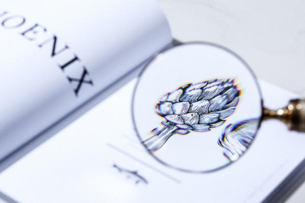 Phönix (10)