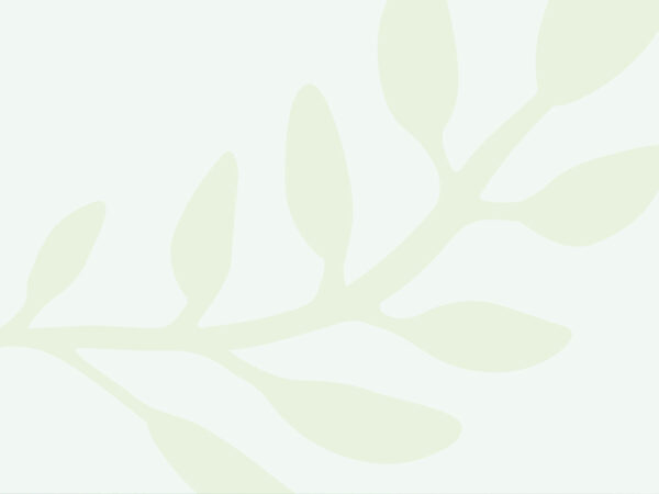 PaoPao Essentials (6)