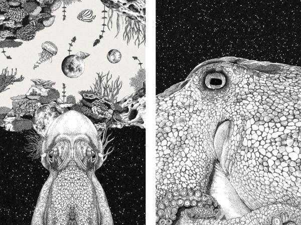 Kanaloa – Ein Wesen aus einer anderen Welt? (11)